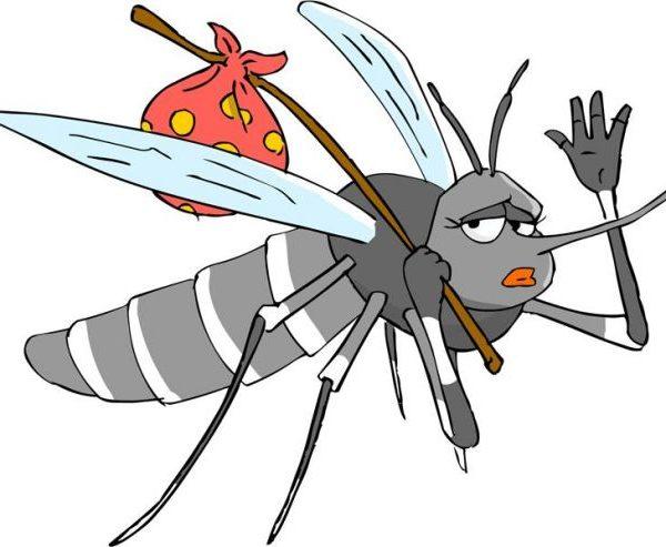 Zanzare-